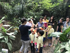 Fragile Rainforest Guided Tour SSDB 18